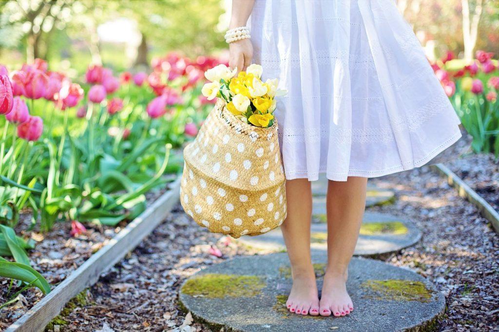 niderlandica, tulipany, wiosna